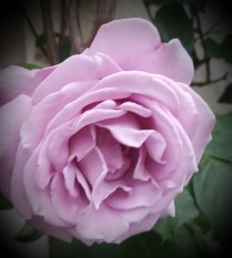 The Many Petals To The Passage To Your Jewel In Your Nile
