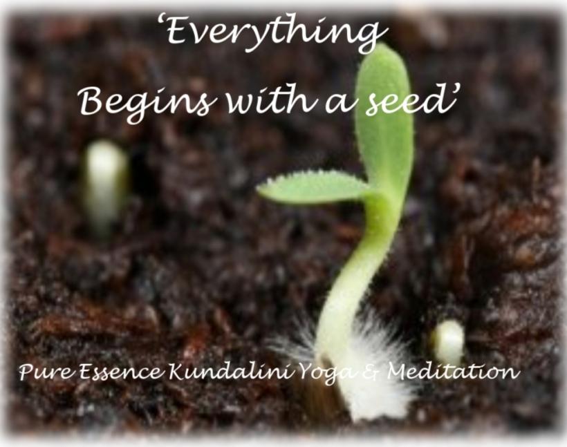 yoga seed